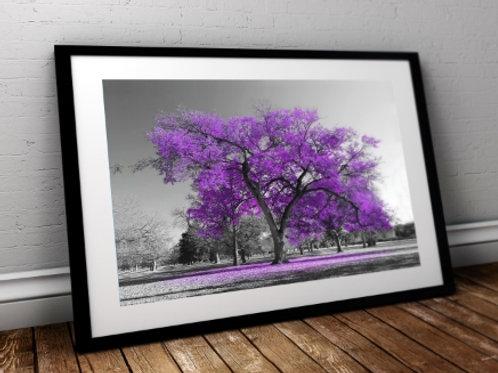 quadro, Fotografia, Árvore lilás, preto e branco, paisagem, mercado livre, poster, canvas, barato, moderno, sala, quarto