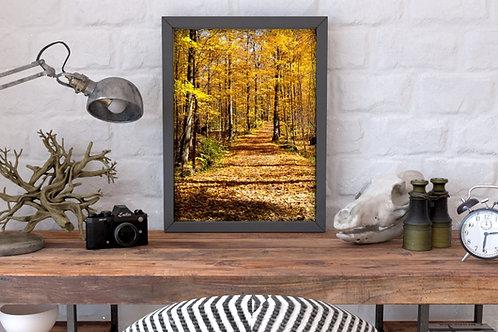 fotografia,Trilha,folhas amarelas,árvores,outono,poster,gravura,reprodução,réplica,canvas,tela,pintura,fine art