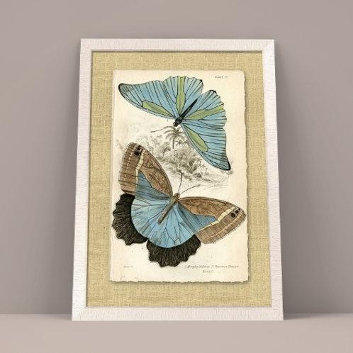 borboletas, azuis, borboletas azuis, quadro borboletas, quadro, poster, gravura, reprodução, canvas, replica, releitura, tela