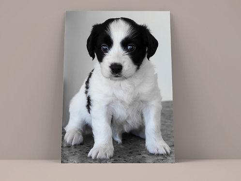 animal,cachorro,pet,sala,de,jantar,estar,quarto,escritório,poster,gravura,reprodução,réplica,canvas,tela,pintura,fine art