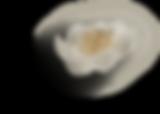 Peonies (2) - Flower Flatlay #4 (c).png