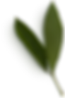 Peony Leaves #1.png