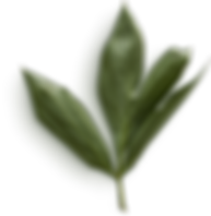 Peony Leaves #23.png