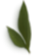 Peony Leaves #2.png