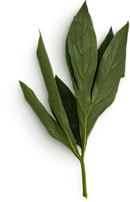 Peony Leaves #24.png