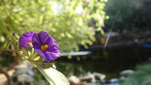 פרח במשק