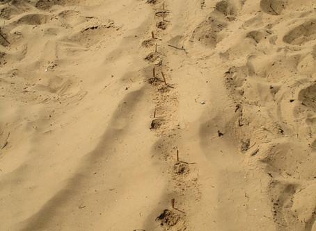 מעבר מהתגנבות לדריכה כפולה: למה חשוב להכיר את דגמי ההליכה ולהשתמש במקלות לסימון עקבות