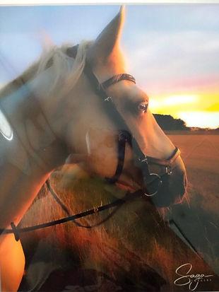 Saga Imagery Horse Photograph
