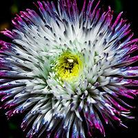 Flowers190318_DCPC_TopFlowerSeries-1.jpg