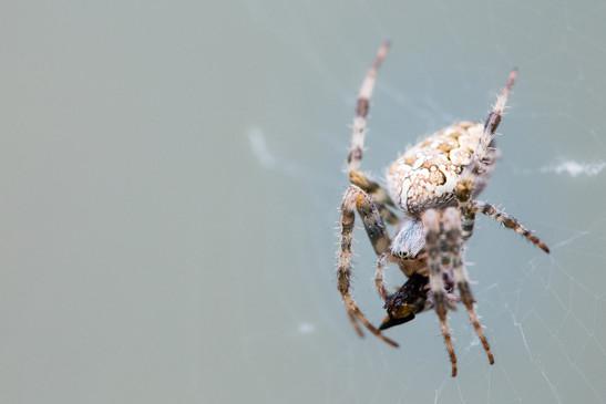 SPIDER1_edited_edited_edited.jpg