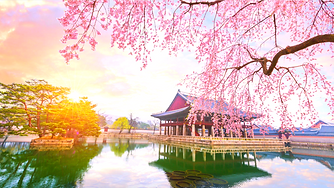 Cherry-Blossoms-Banner-2.png
