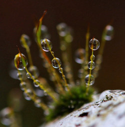 3rd Colour Water droplets on Moss - Liz