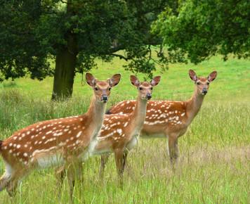 Winner - Oh deer! - Eve.JPG