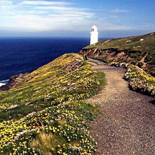 Path Leading to Trevose Lighthouse - Raymond.jpg