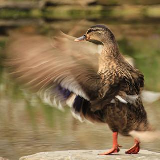 Winner- Flapping my Wings - Raymond.jpg