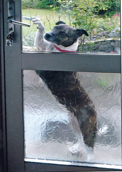 Let me in - Ann