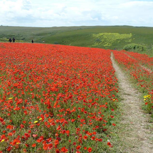 A Cornish Landscape - Polly Joke.jpg