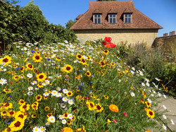 Summer Garden Barrington Court -Jeanette