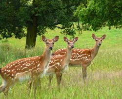 Winner - Oh deer! - Eve