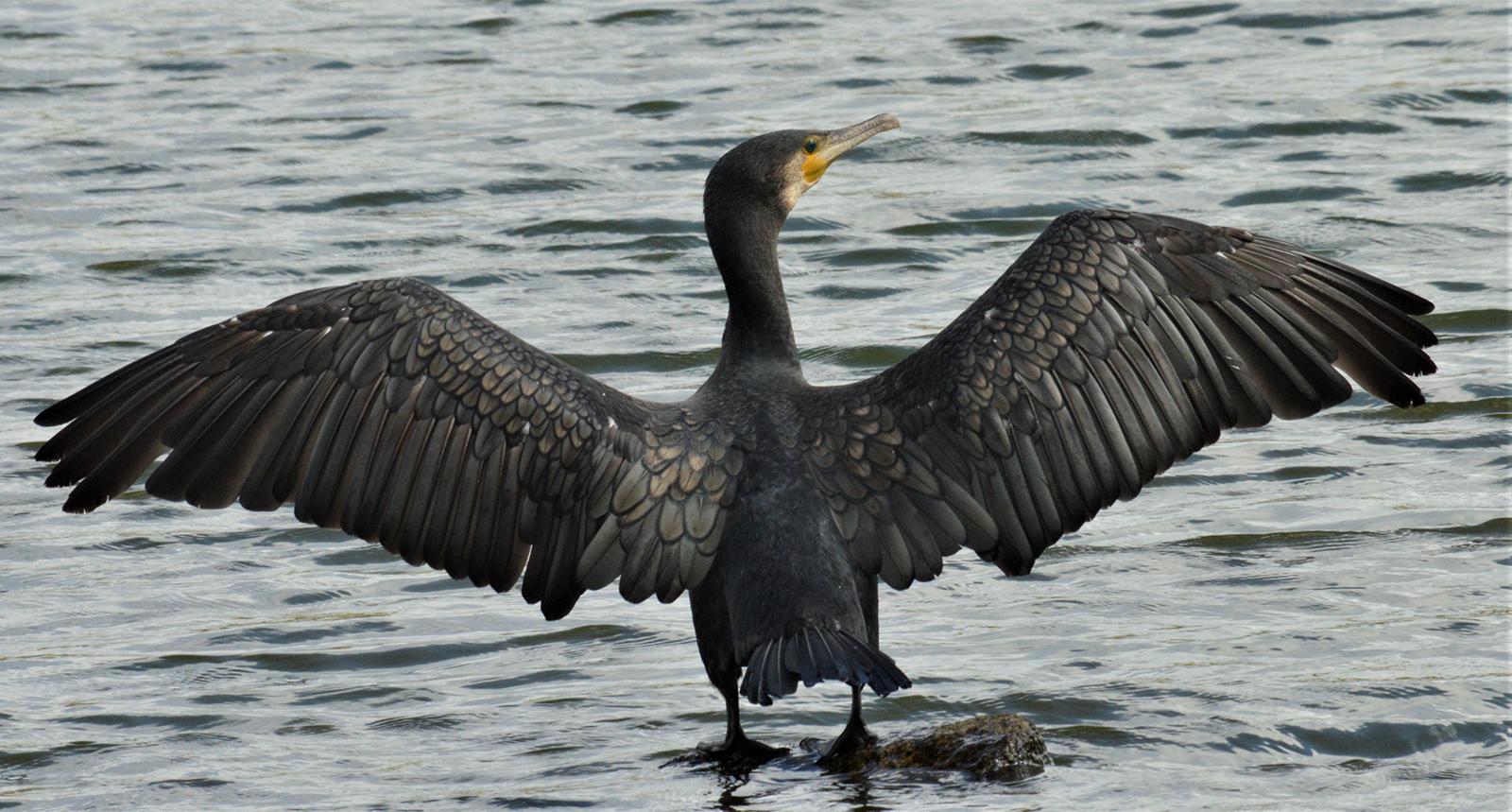 KF2 Digital  1st- Stretching my Wings -