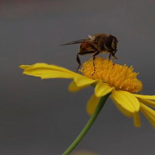 Bee Happy - Liz.jpg