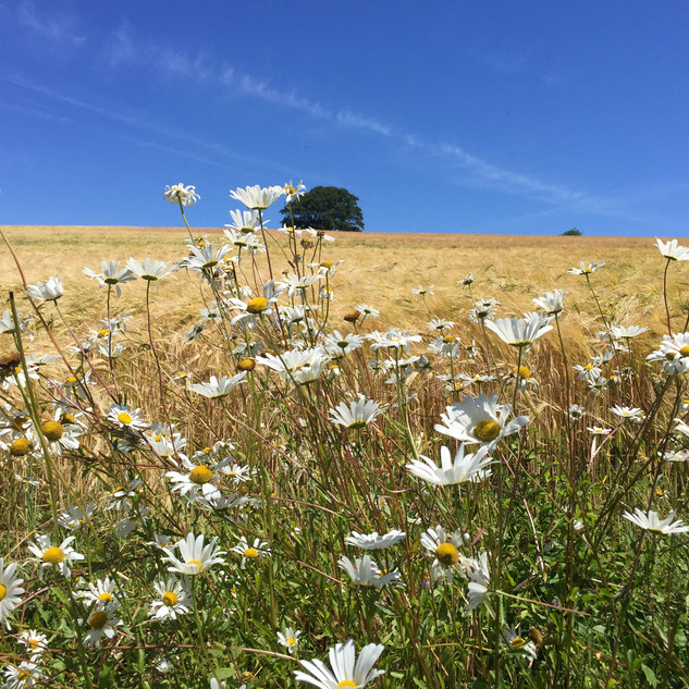 A Cornish Landscape -  Winner -Rural Myl