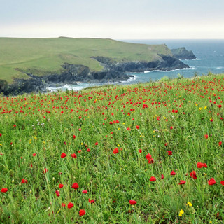 A Cornish Landscape - Polly Joke Poppies