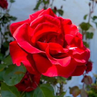 Perfum de Provence - Jan.jpeg