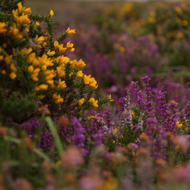 Moor colours - Maly.jpg