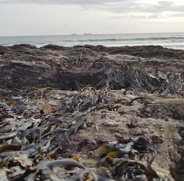 A Cornish Seascape - 4.jpeg