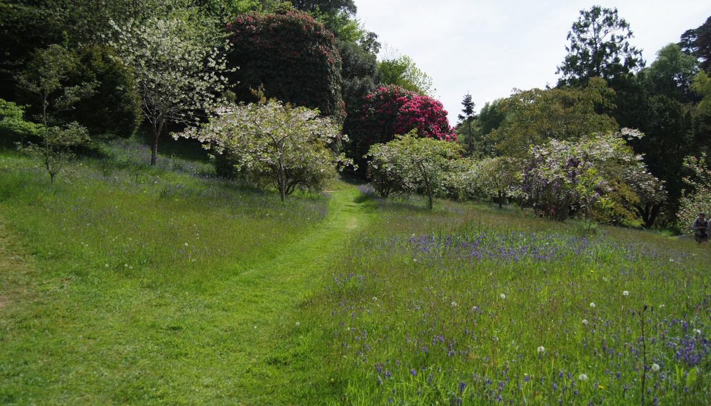 A path in Glendurgan - Maru