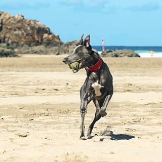 Fetch - Liz.jpg