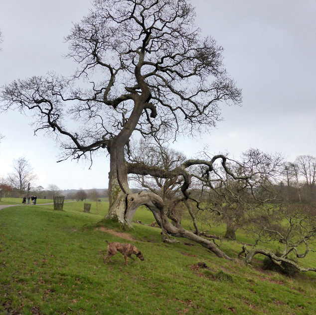 A Cornish Landscape - Trelissick.jpg