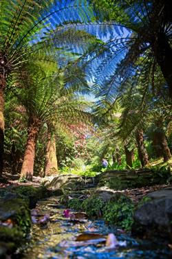 KF2 Digital  3rd - My! What a big fern -