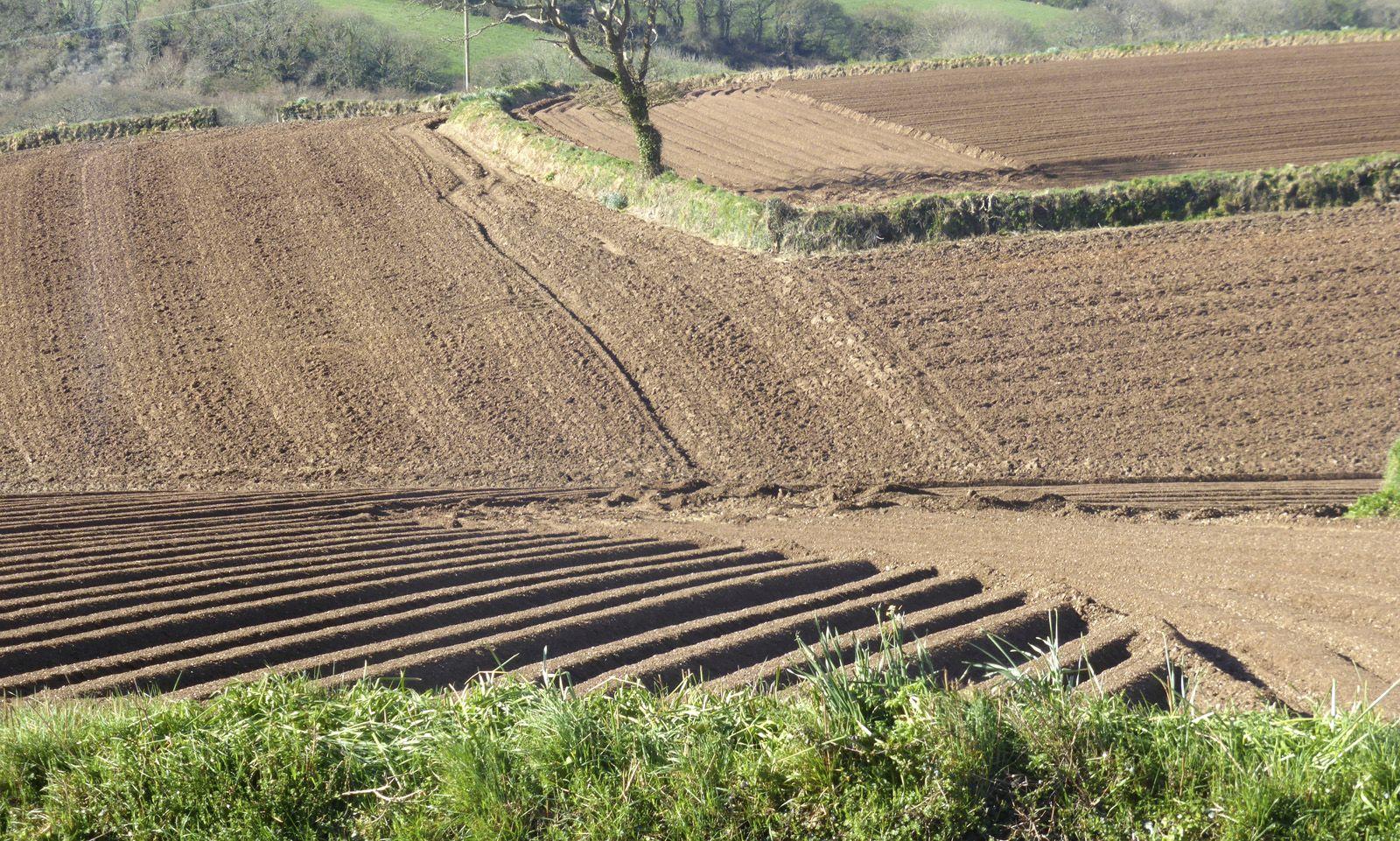 Ploughed fields - Ann