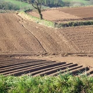 Ploughed fields - Ann.jpg