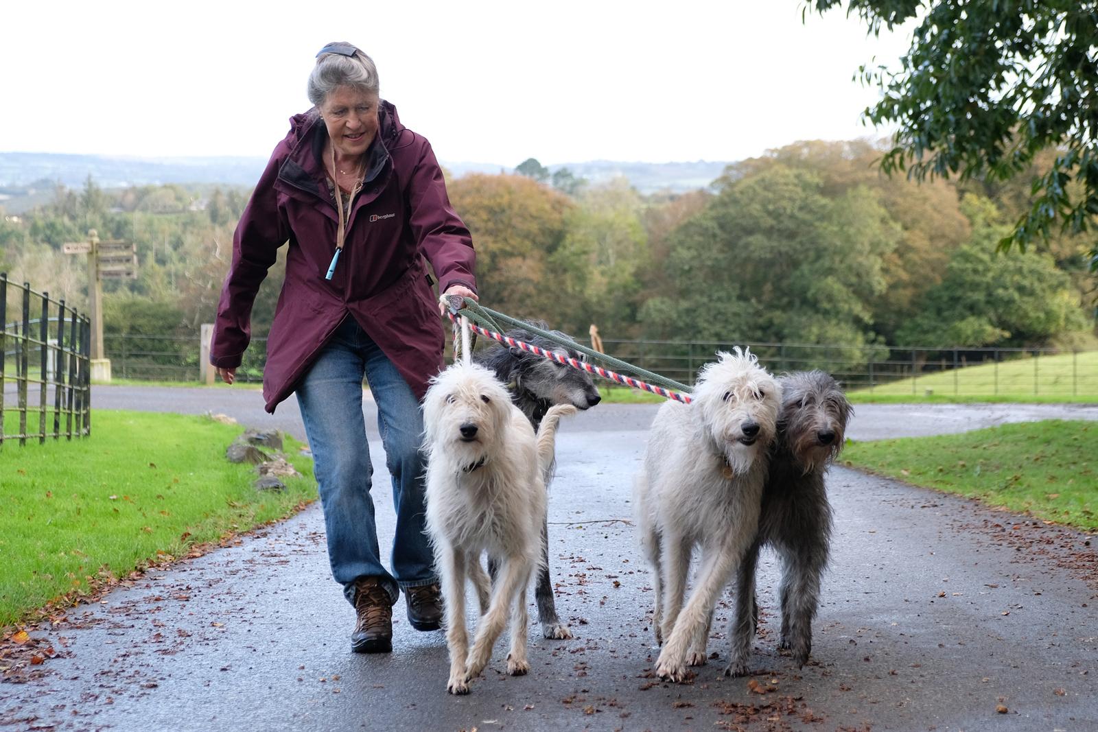 Walking the dogs - Derek