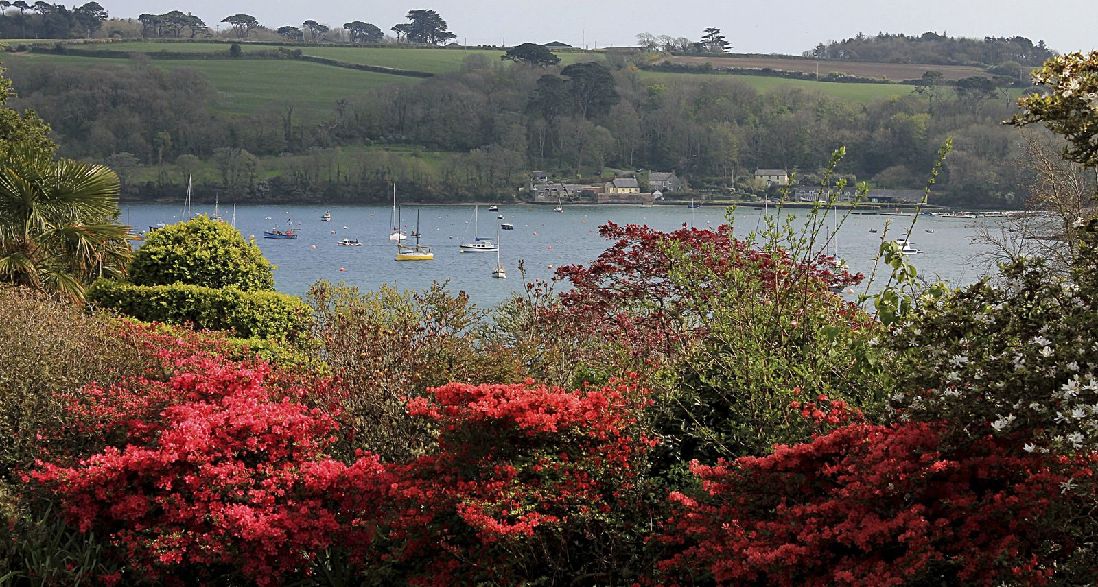 Looking at Helford River - Julia