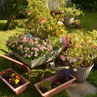 Around the house - Barrow Load of Flower