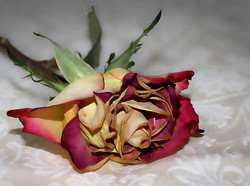 1st Rose - Wendy
