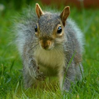 Squirrel - Mandy.jpg