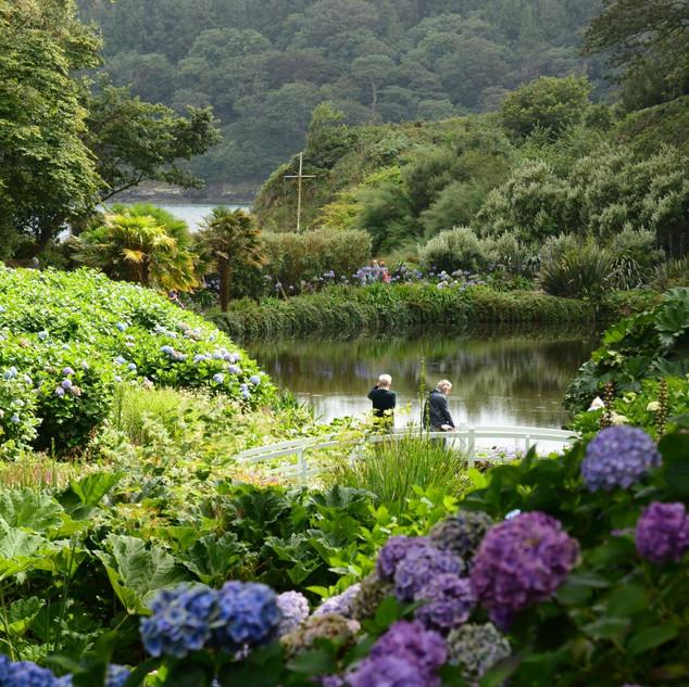 A Cornish Landscape - Glendurgan Gardens