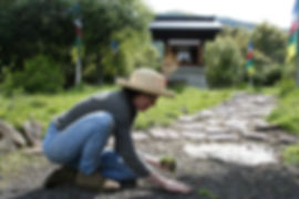 woman weeding in front of Trungpa Stupa