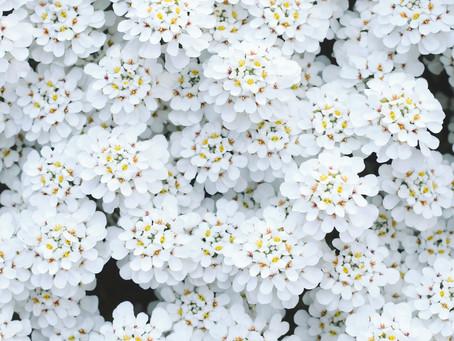 Flowers Of Hackensack