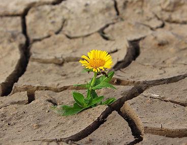 flower-887443_1280.jpg