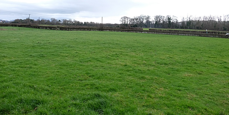 Paddock for horses or exercising dog