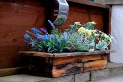 Park View Cottage Afonwen patio plant