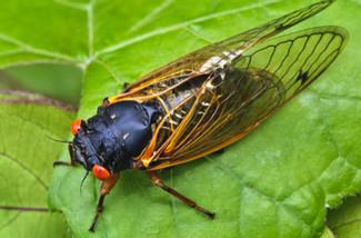 Return of the locusts