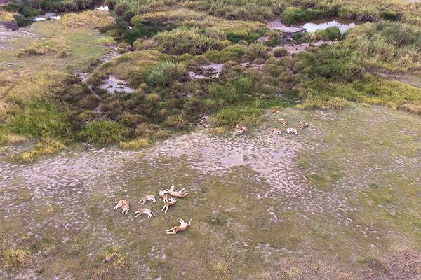 lions drone