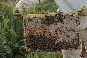 abeilles-3088 logo.jpg